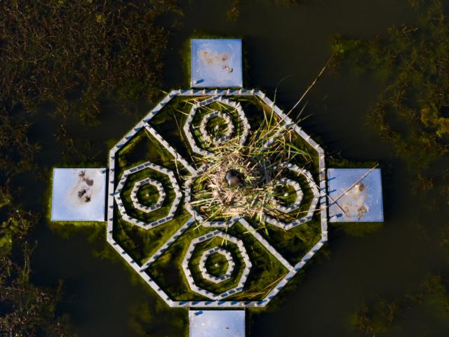 Burgweiher Illingen C
